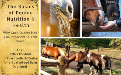The Basics of Equine Nutrition & Health
