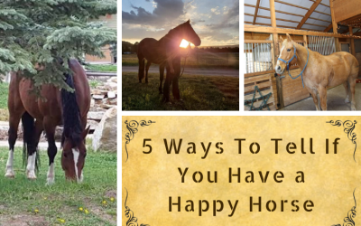 5 Ways To Tell If You Have a Happy Horse